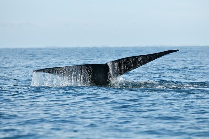 whale-1180729_1280